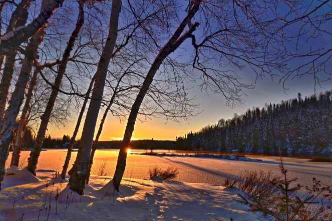 branch branches calm cold